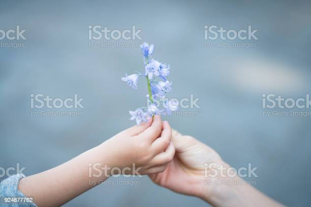 Parent and child hands handing blue flowers picture id924677762?b=1&k=6&m=924677762&s=612x612&h=ck wyt5udgulw7yma bz29du5uocrrrij5gomsgb3po=