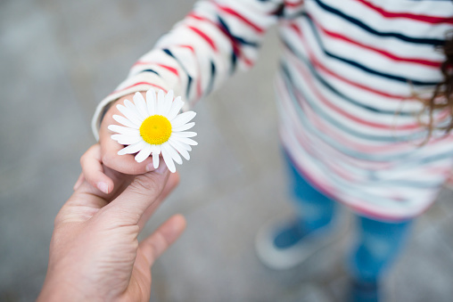 Parent and child hands handing white flower