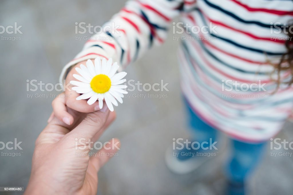 Parent and child hands handing white flower stock photo