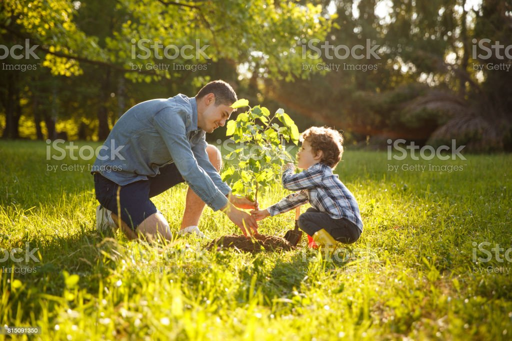 Parent and child planting tree stock photo