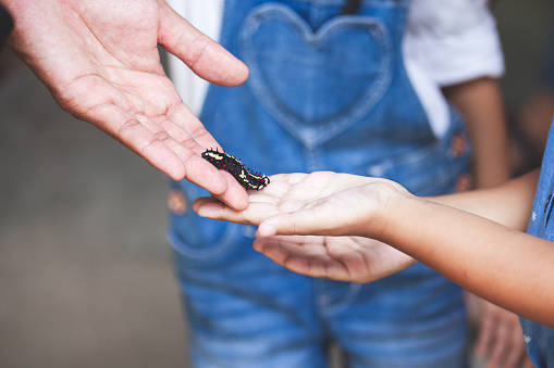 Parent give black caterpillar to daughter to touch and learn about animal life