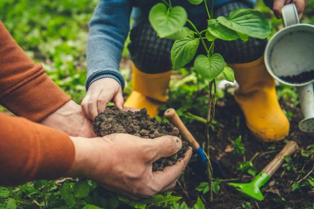 les mains de parent et son enfant aidant jardiner le jour d'arbor au printemps - plante photos et images de collection