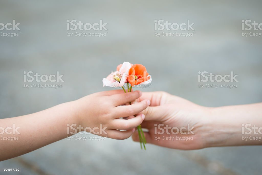 Parents hands handing poppy flowers stock photo
