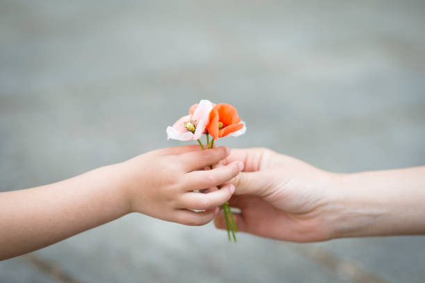 parents hands handing poppy flowers - accudire foto e immagini stock