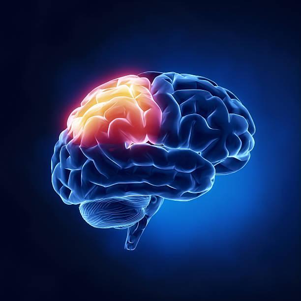 Scheitellappen-menschliche Gehirn auf x-ray Blick – Foto