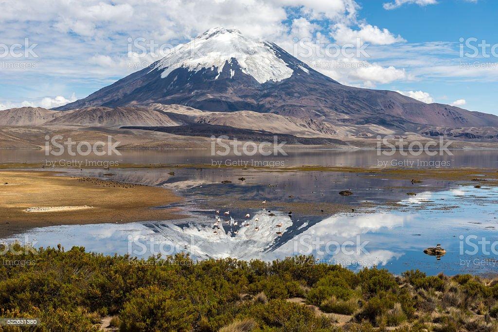Parinacota volcano and Chungara lake, Lauca National Park (Chile) stock photo