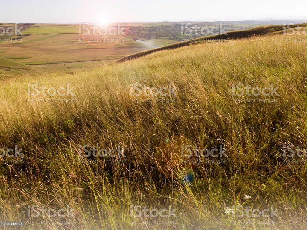 paririe grass sunset stock photo