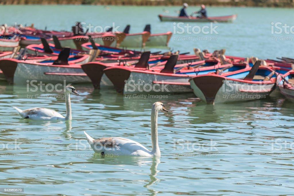 Paris, le lac du Bois de Vincennes - Photo