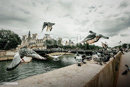 istock Parisian Pigeons 1299595656