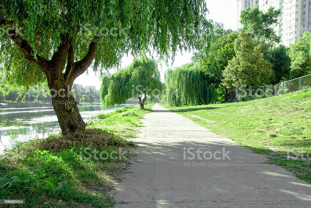Park alley. royalty-free stock photo