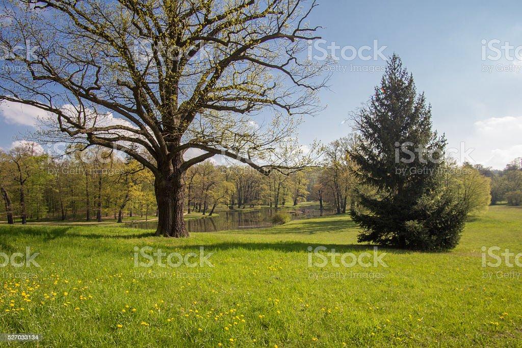Park and Castle Bad Muskau stock photo