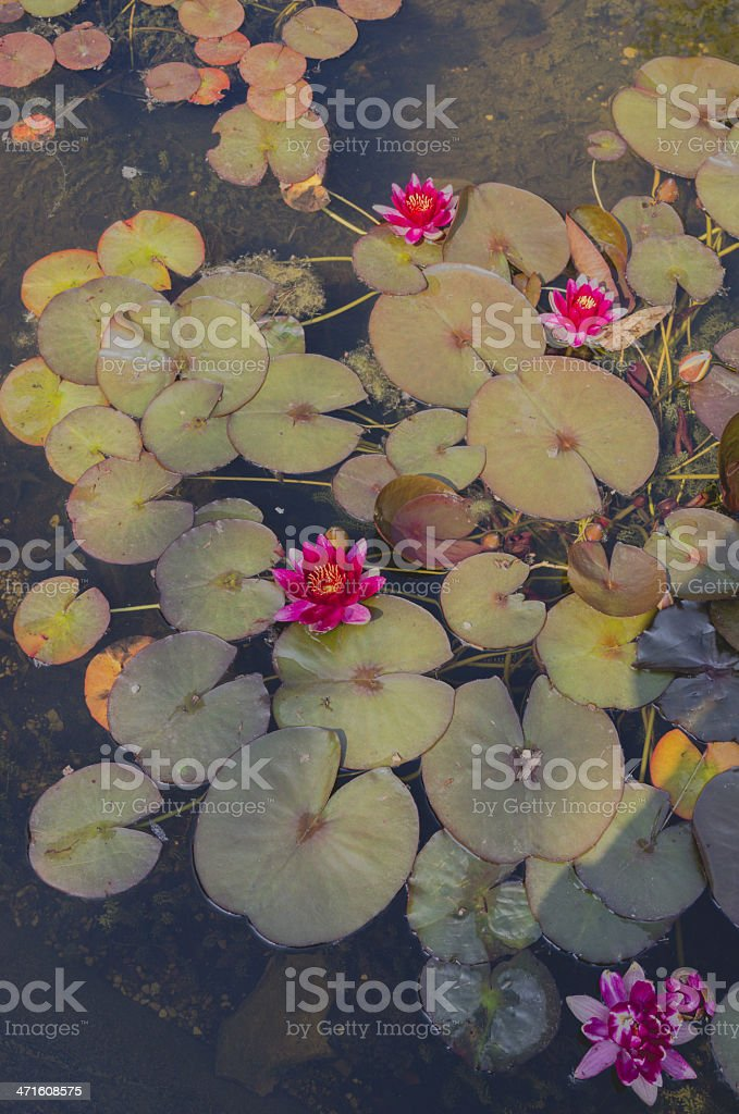 park and gardens royalty-free stock photo