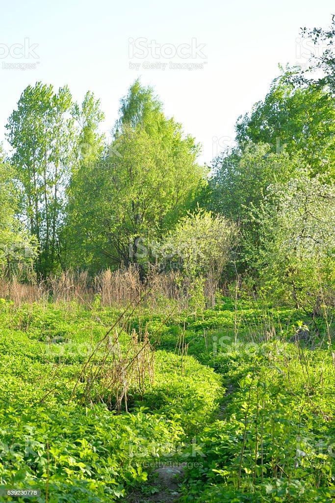 Park at spring. royalty-free stock photo