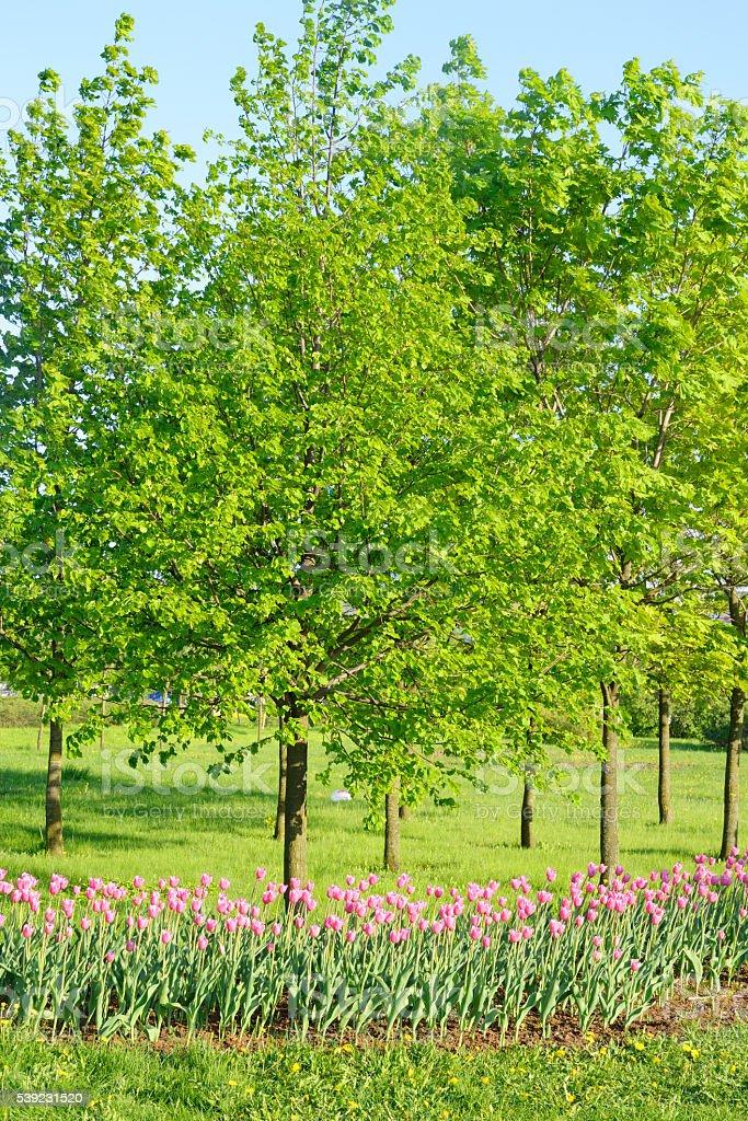 Parque en primavera. foto de stock libre de derechos