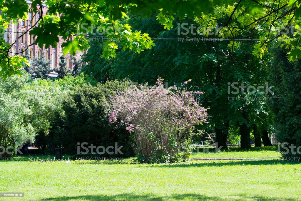 Park at the Cathedral of Koenigsberg royalty-free stock photo