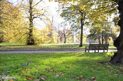 A back lit view to the beautiful park landscape in autumn and squirrel running.