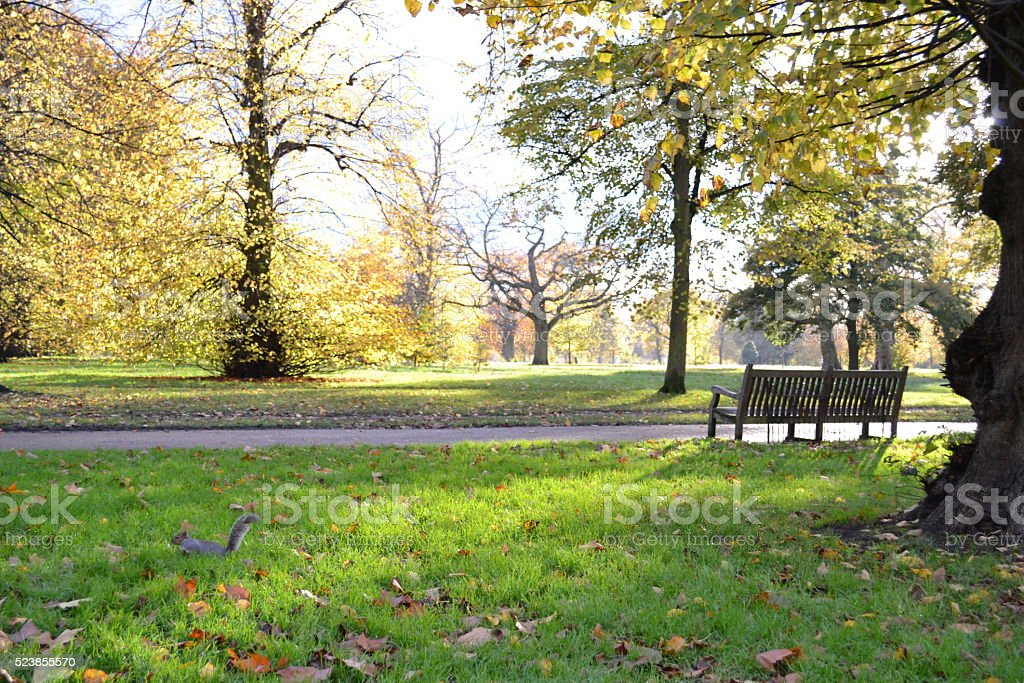 Park beautiful autumn landscape  in a sunny day. stock photo