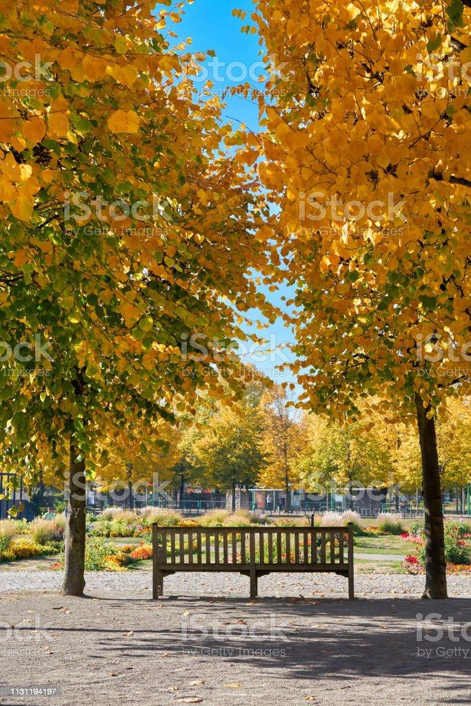 Parkbank im herbstlichen Park – Foto