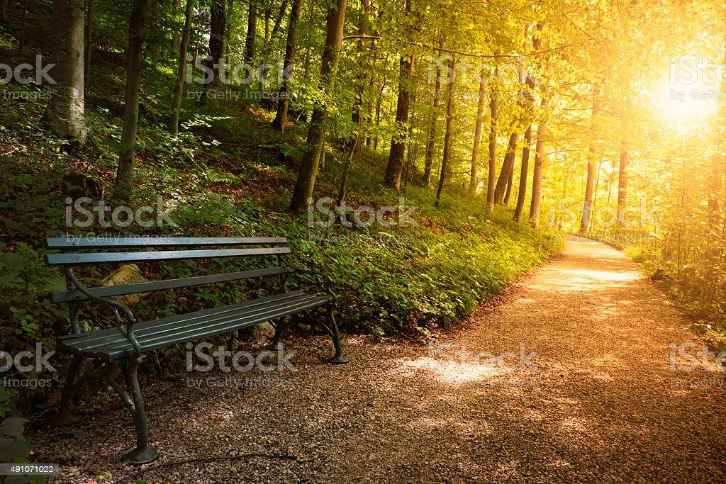 Banc dans le parc en automne - Photo