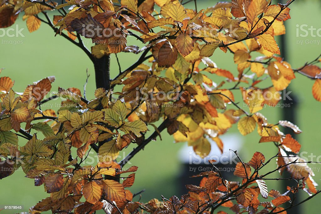 Park Bench in Autumn royalty-free stock photo