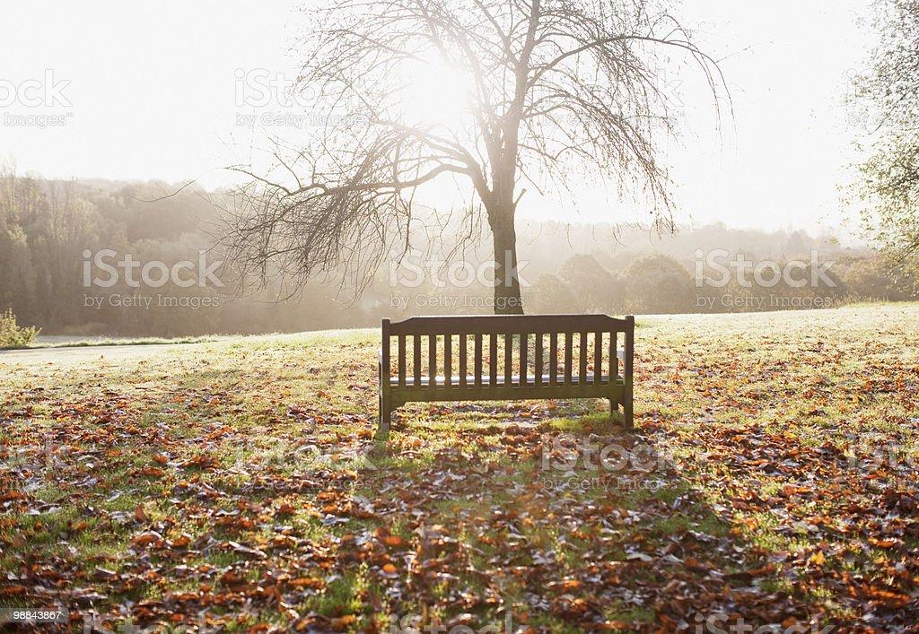 Park bench in autumn 免版稅 stock photo