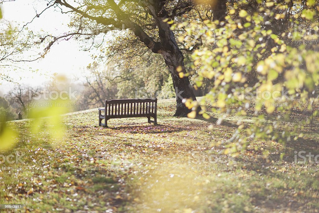 Park bench in clearing in autumn stock photo