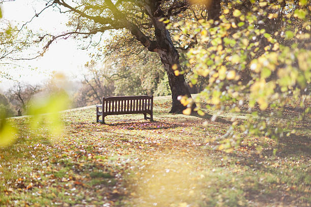 park bench in clearing in autumn - zitbank stockfoto's en -beelden