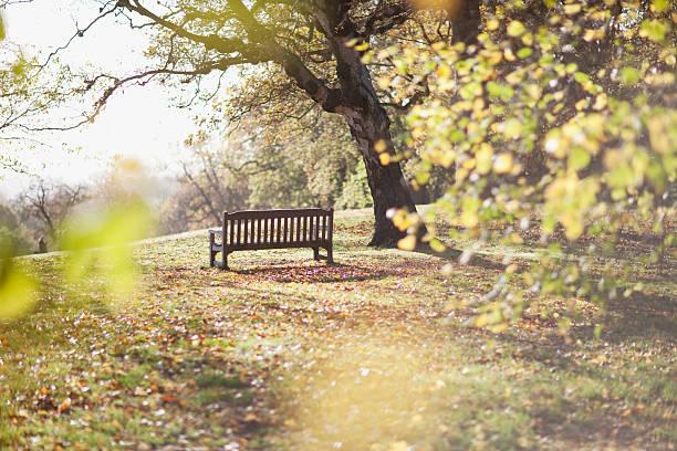 park bench in clearing in autumn - bench bildbanksfoton och bilder