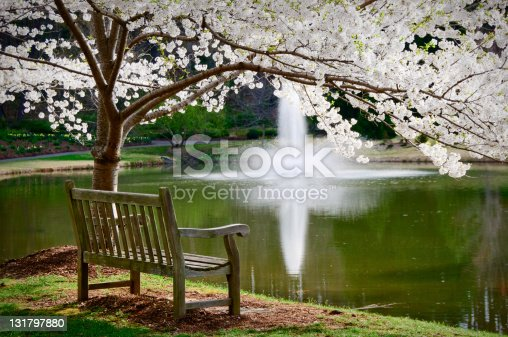 A park bench overlooking a tranquil pond with a water fountain.  Japanese cherry tree is in full bloom above the bench.