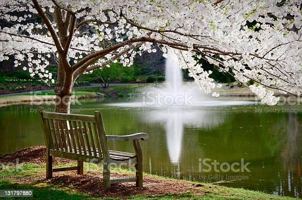 Park bench in tranquil scene picture id131797880?b=1&k=6&m=131797880&s=612x612&h=puefgvmdsdktwayevitpm9wxwq9yh matt0vl7sdeku=