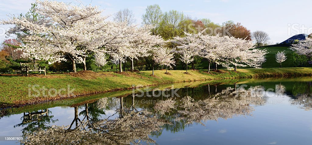 XXXL: Park bench overlooking pond royalty-free stock photo