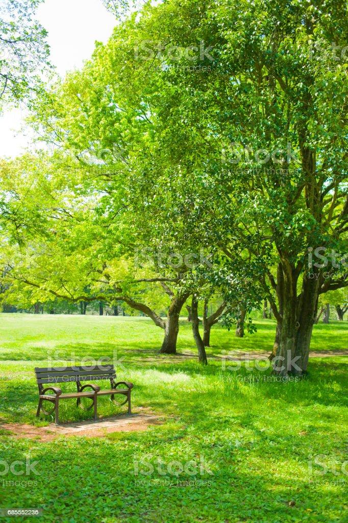 公園的長椅上 免版稅 stock photo