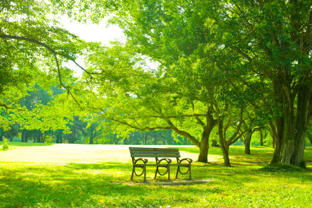 Park bench Sunny park satoyama scenery stock pictures, royalty-free photos & images
