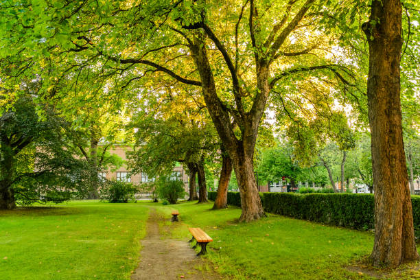 Park Bänken – Foto