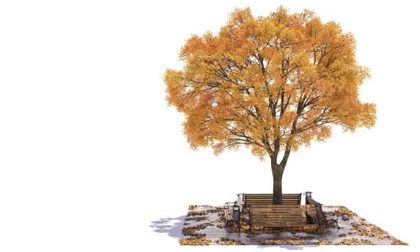 Parkbänke aufgestellt um einen goldenen Großblättrige Baum – Foto
