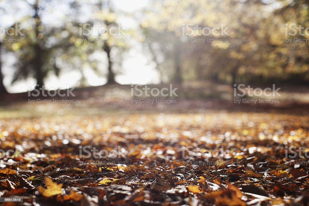Park clearing in autumn royalty free stockfoto
