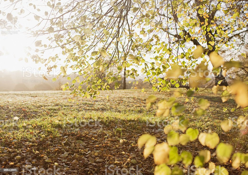 Park clearing in autumn royalty-free stock photo