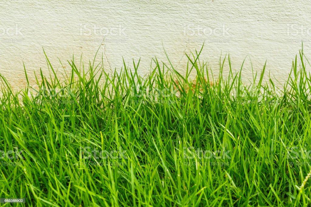 Park grassy zbiór zdjęć royalty-free