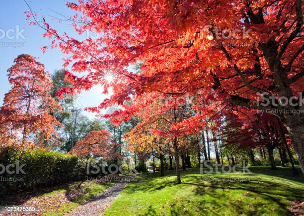 Photo of Park in autumn, Vancouver, Canada