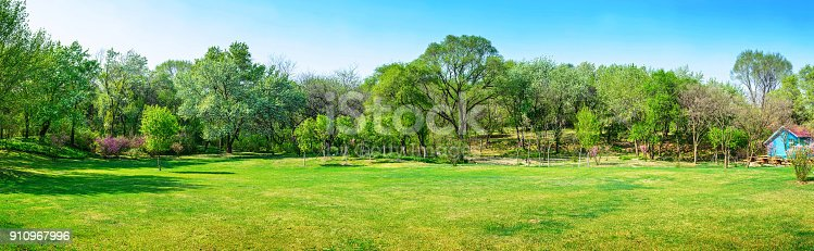 Colorful natural flower meadows landscape with blue sky in summer. Habitat for insects, wildflowers and wild herbs on a flower field. Close-up with short depth of focus and space for text.