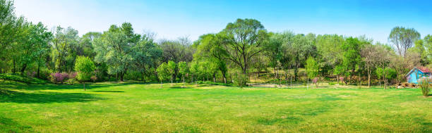 Park in early spring stock photo