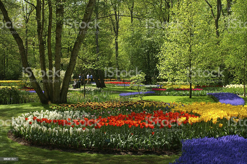Park in The Spring royalty-free stock photo