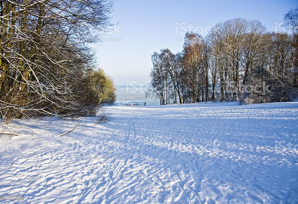 Park in the winter stock photo