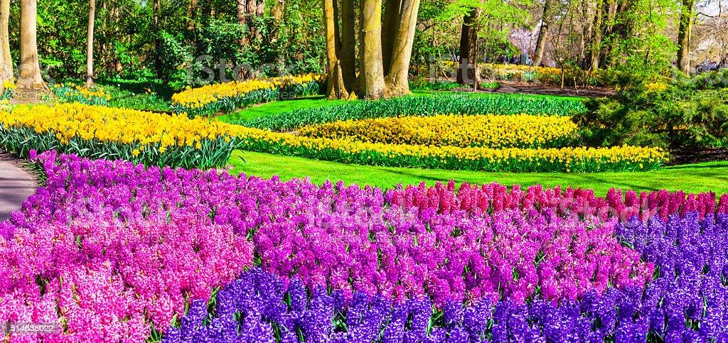 Park Keukenhof in Holland. stock photo