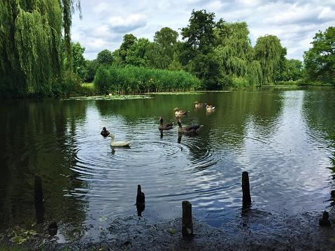 Park lake Alster Hamburg
