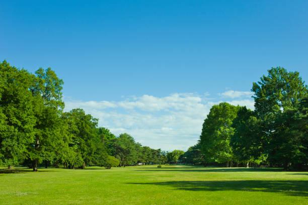公園の芝生 ストックフォト