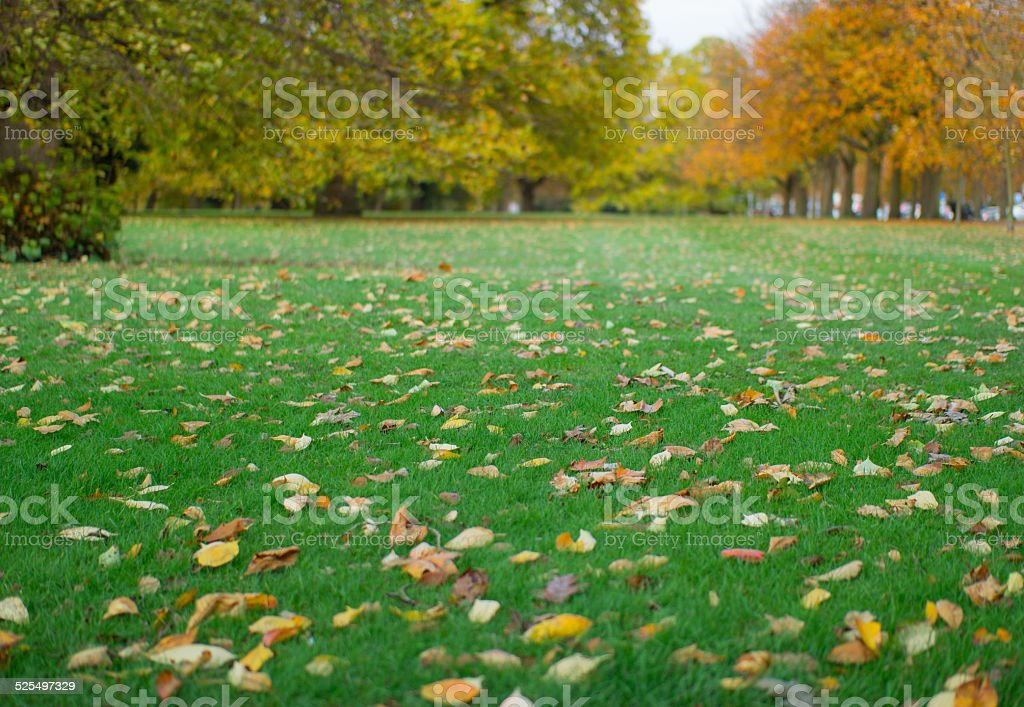 Park Lawn with Leaves stock photo