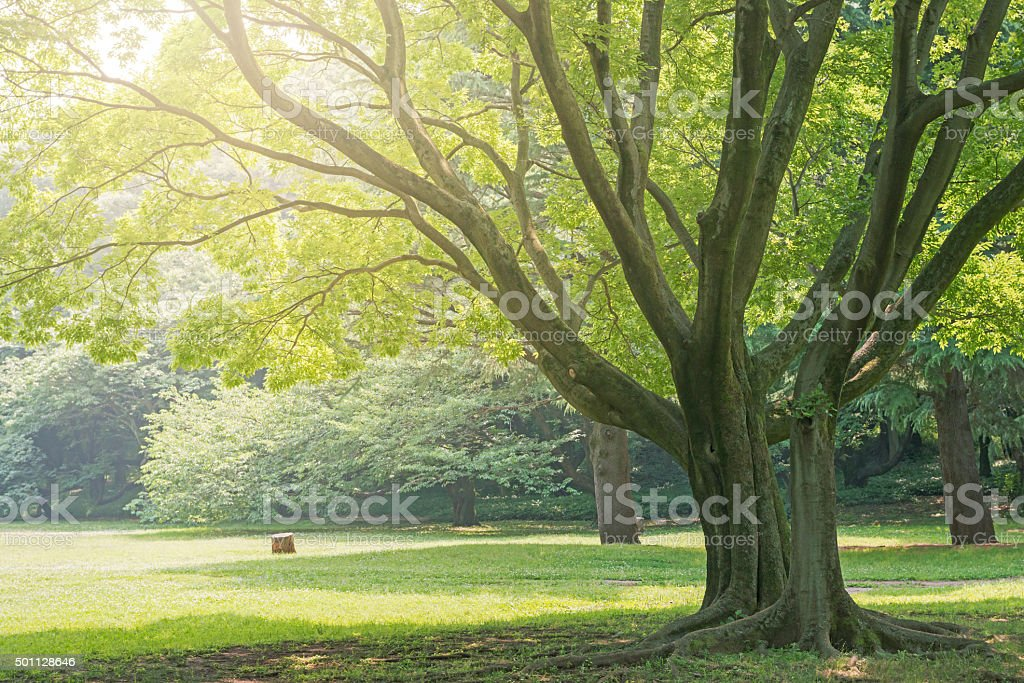 Park of big tree and grass stock photo