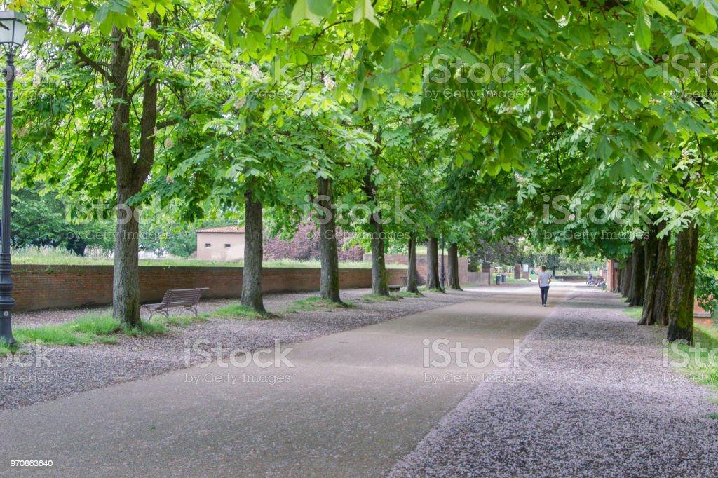 Park an der historischen begehbare Stadtmauer der italienischen Stadt Lucca in der Pisa-region – Foto