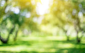 Park outdoor landscape. Summer abstract bokeh background